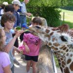 binder-park-zoo